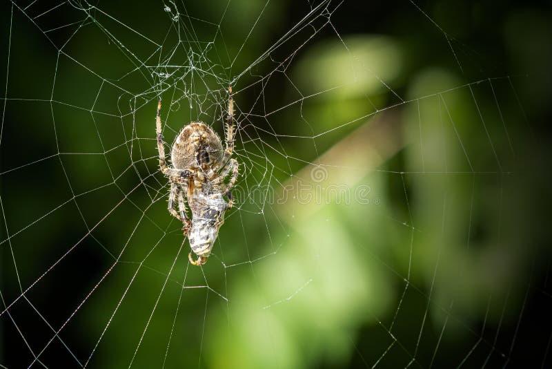 Spider in seinem Netz an einem schönen sonnigen Tag lizenzfreies stockbild