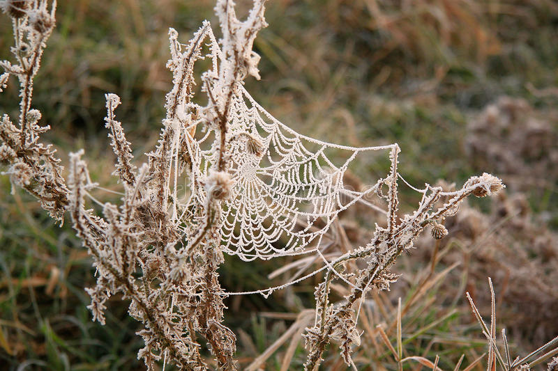 Spider silk royalty free stock images