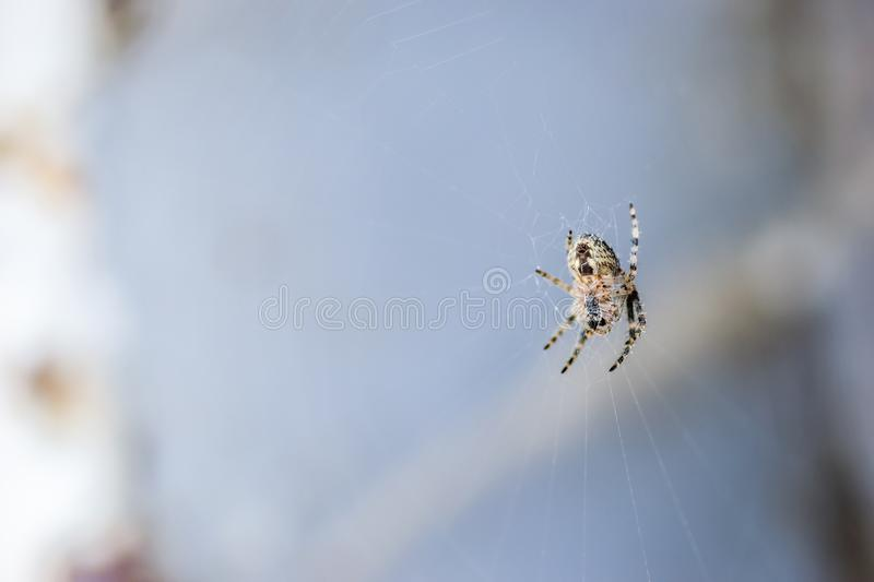 Spider in its natural environment stock photography