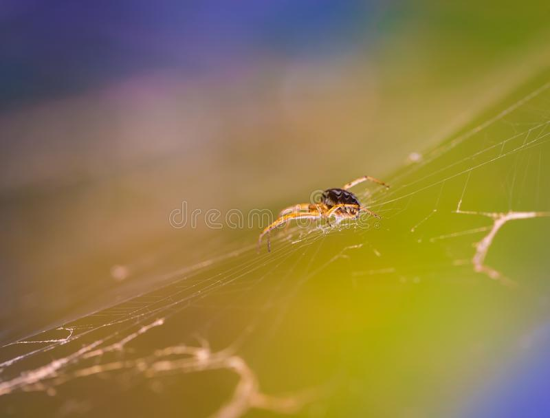 Spider sitting on his web royalty free stock image