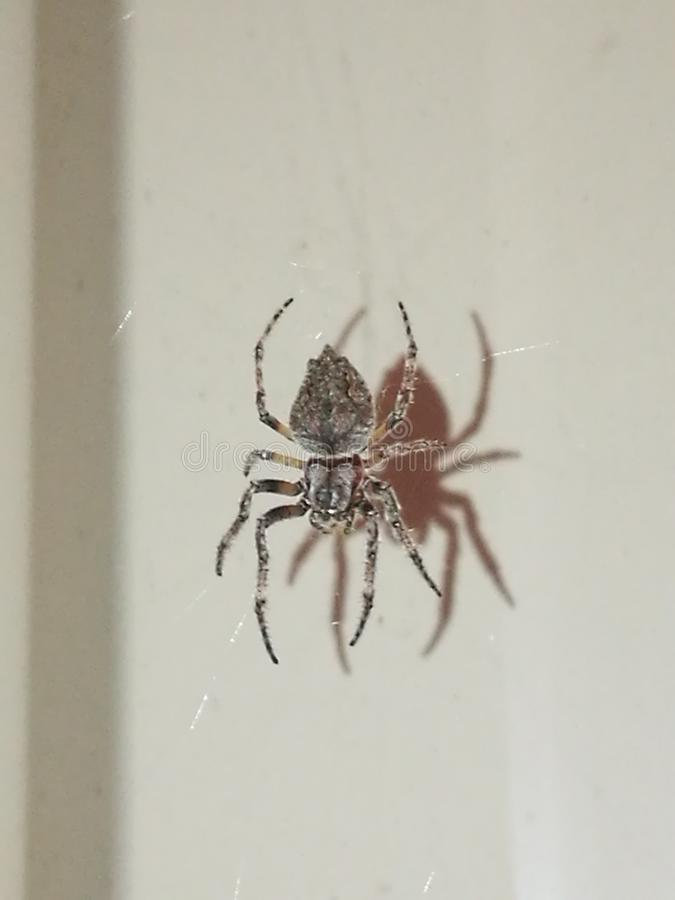 Spider& x27; sombra de s fotografia de stock