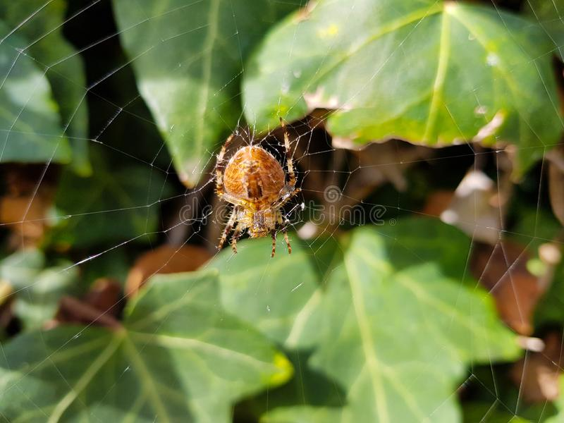 Spider on spider& x27;s web with landscape and green background stock images