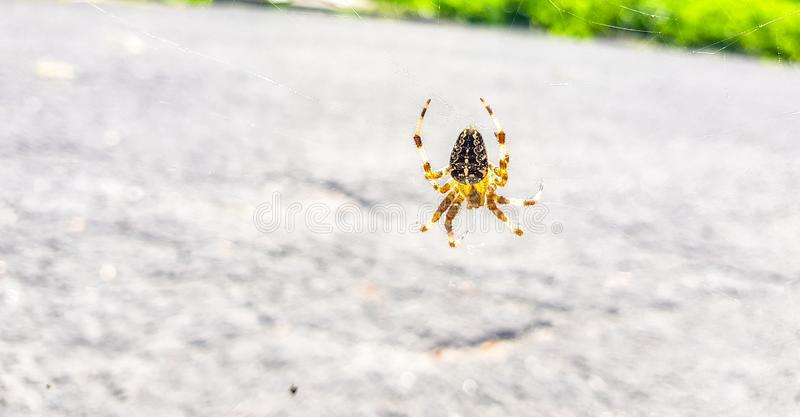 Spider on spider& x27;s web with landscape and road background royalty free stock images