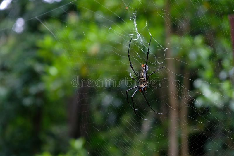 Spider and spider web close up stock images