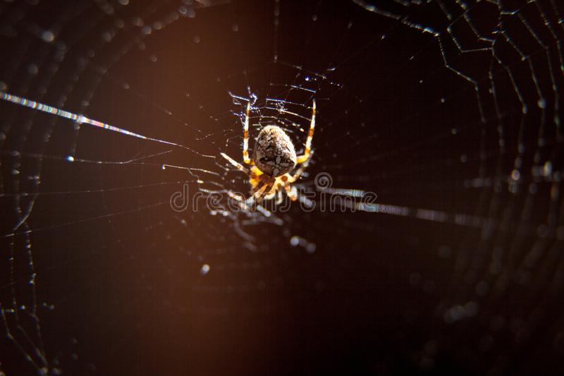 A spider spinning its web stock images