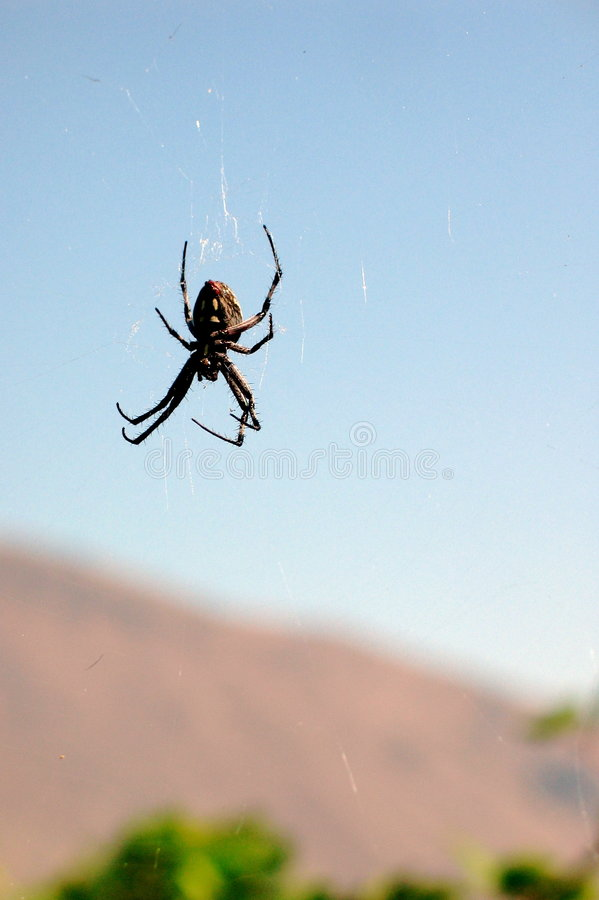 Download Spider spinning web stock image. Image of outdoor, outside - 153279