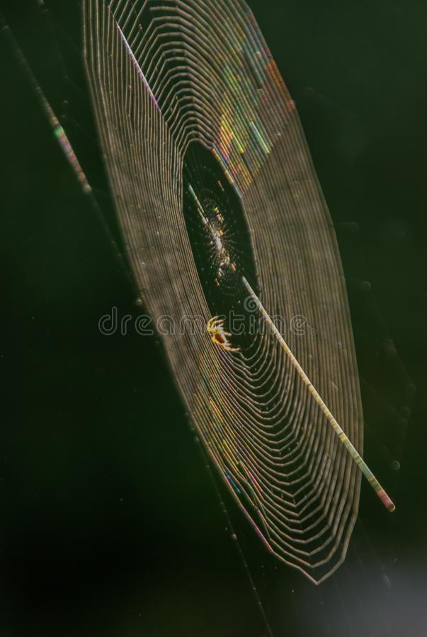 Sunset Spider Web Reflections. A spider spins her web in a fall garden as the sun nears the horizon stock photos