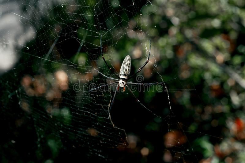 Spider in thailand stock photography
