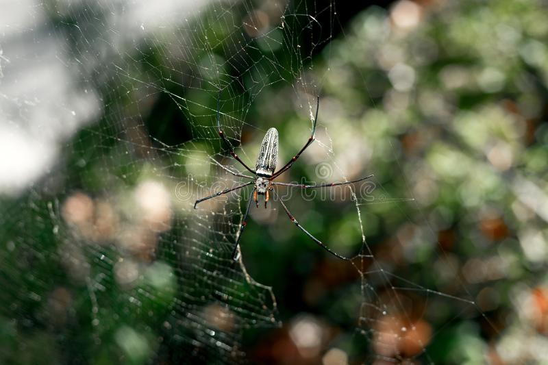 Spider in thailand royalty free stock photography