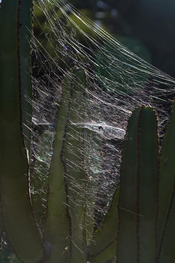 Spider trap. An image of backlight spider trap royalty free stock photography