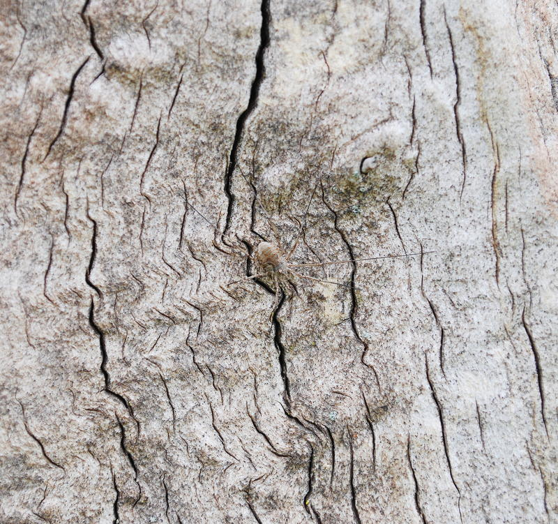 Spider on the tree bark. Close up spider on the tree bark royalty free stock photography