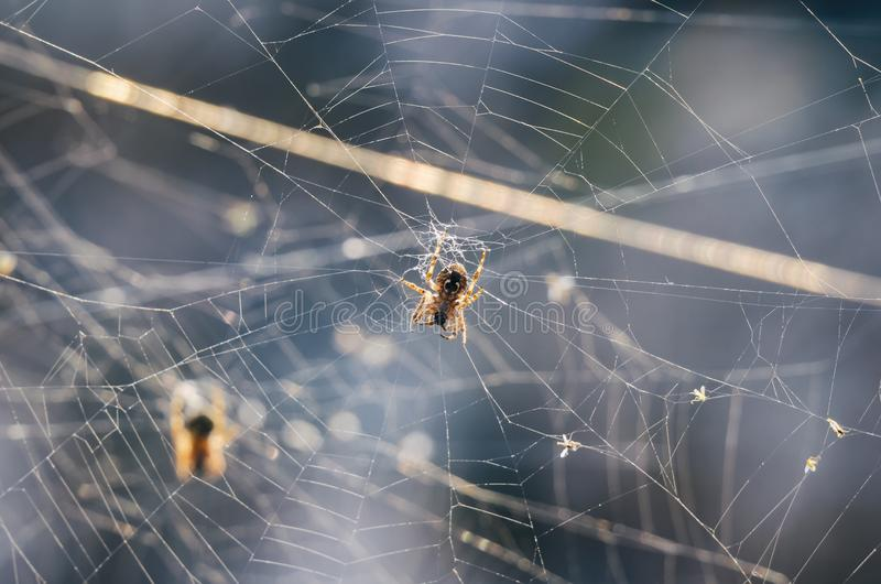 SPIDER TWO royalty free stock image