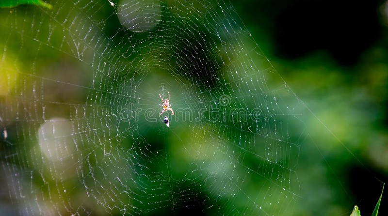 The Spider And The Victim On The Web Stock Image