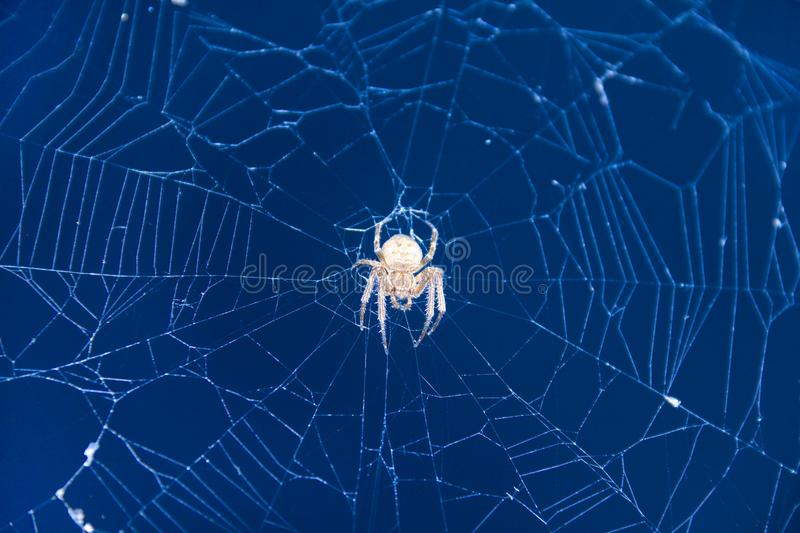 Spider waiting for its prey on the web stock images