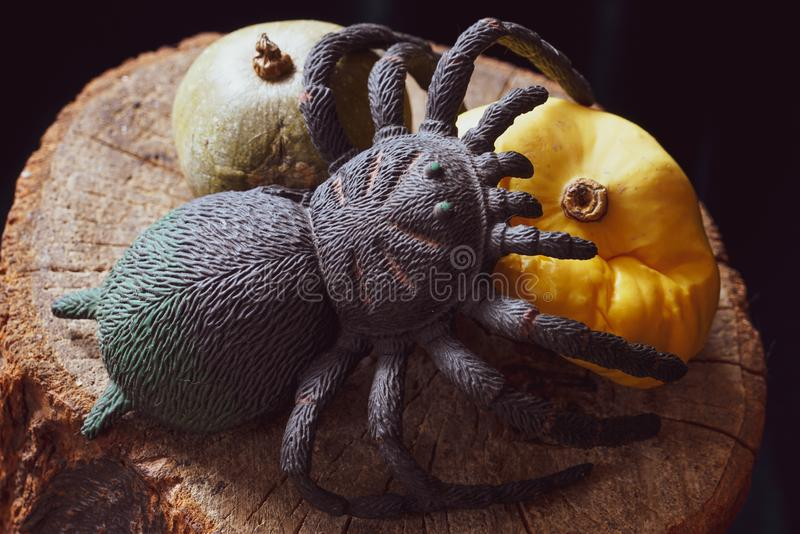 The spider is waiting for prey on the forgotten fruits of pumpkin last year, lying on a dry wooden stump stock image