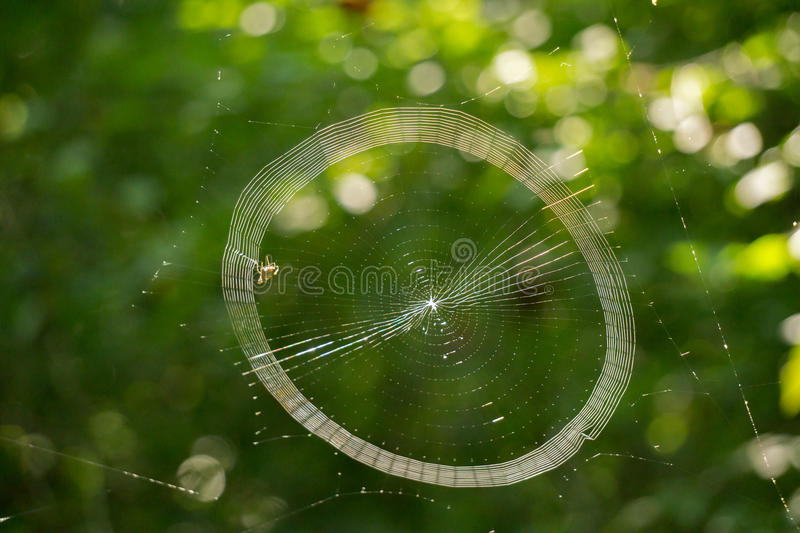 Spider Weaving It's Web. A spider hard at work weaving it's web located in the woods of Virginia, USA stock images