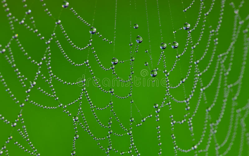 Spider web. Macro image of spider web with dewdrops on it royalty free stock photos