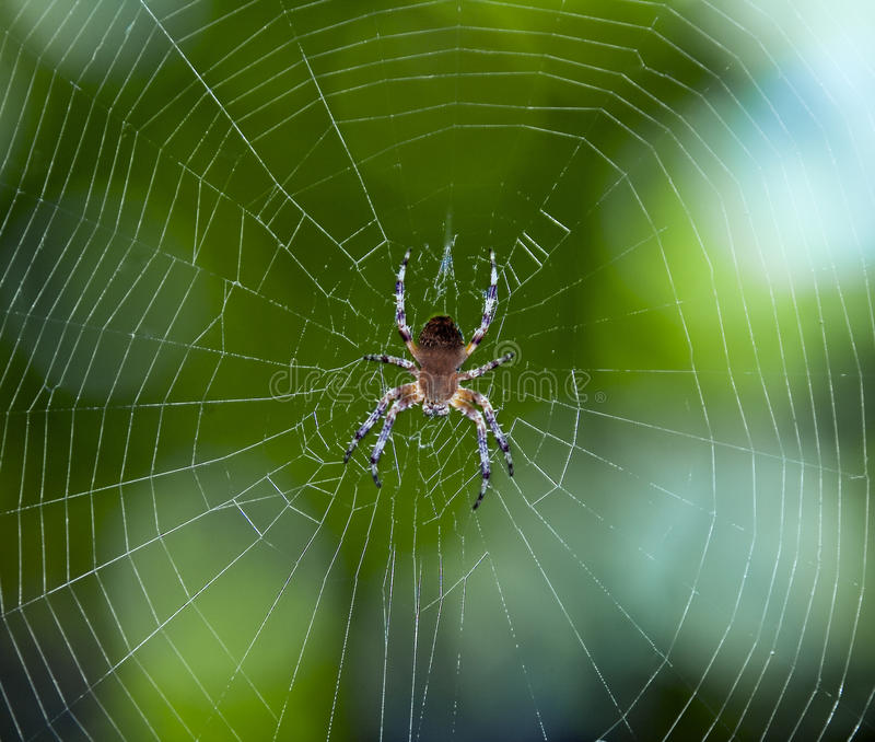 Download Spider on the web stock image. Image of crawl, connections - 10618445