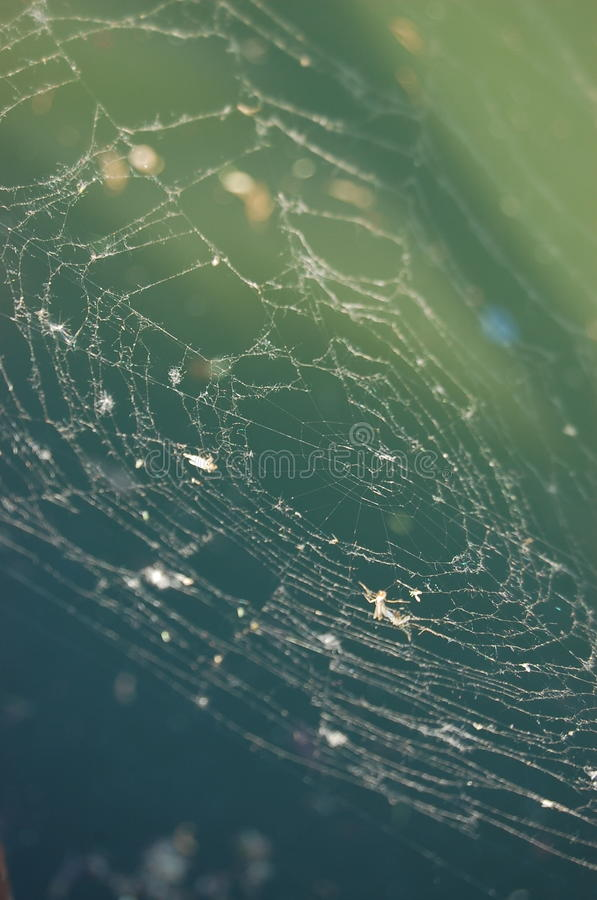 Download Spider Web Stock Photo - Image: 11154150