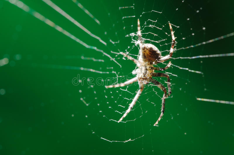 Download Spider on web stock photo. Image of backgrounds, arachnid - 12791008