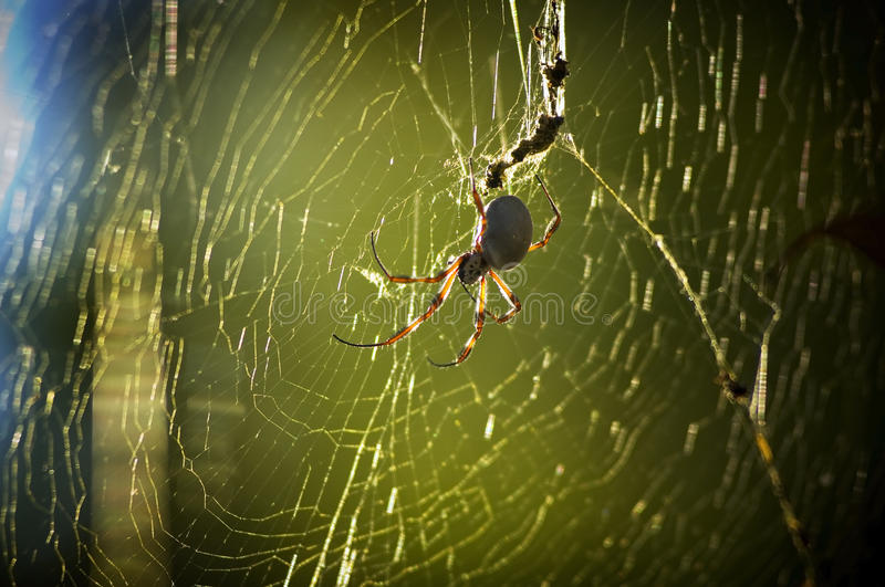 Download Spider in Web stock photo. Image of close, garden, sunny - 15247036