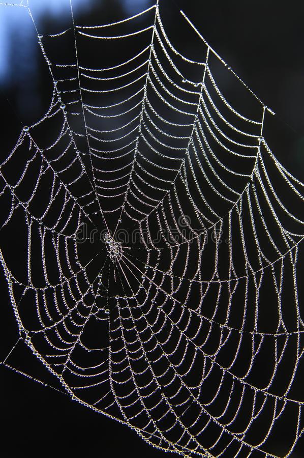 Free Spider Web Stock Photo - 15369440