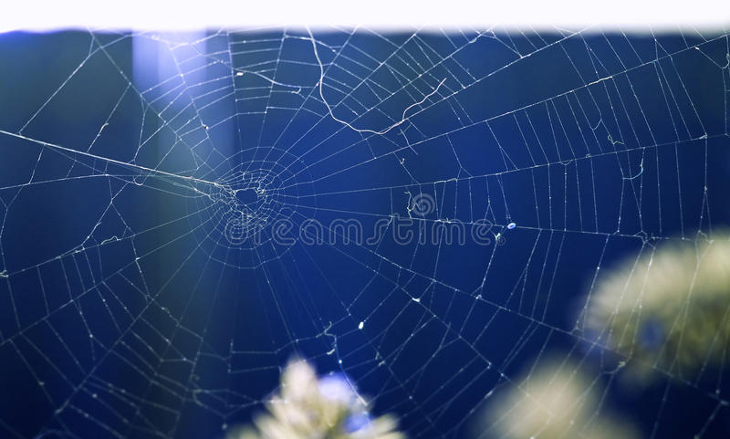 Spider web. Texture on blue background stock images