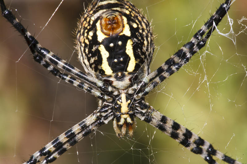 Download Spider on web stock photo. Image of outside, spider, pretty - 19265806