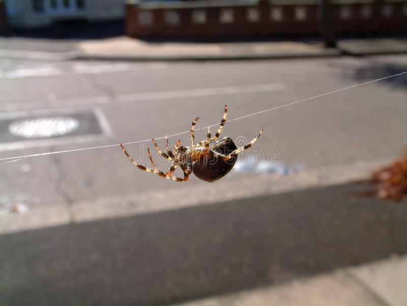 Spider On Web 2 Free Stock Photography