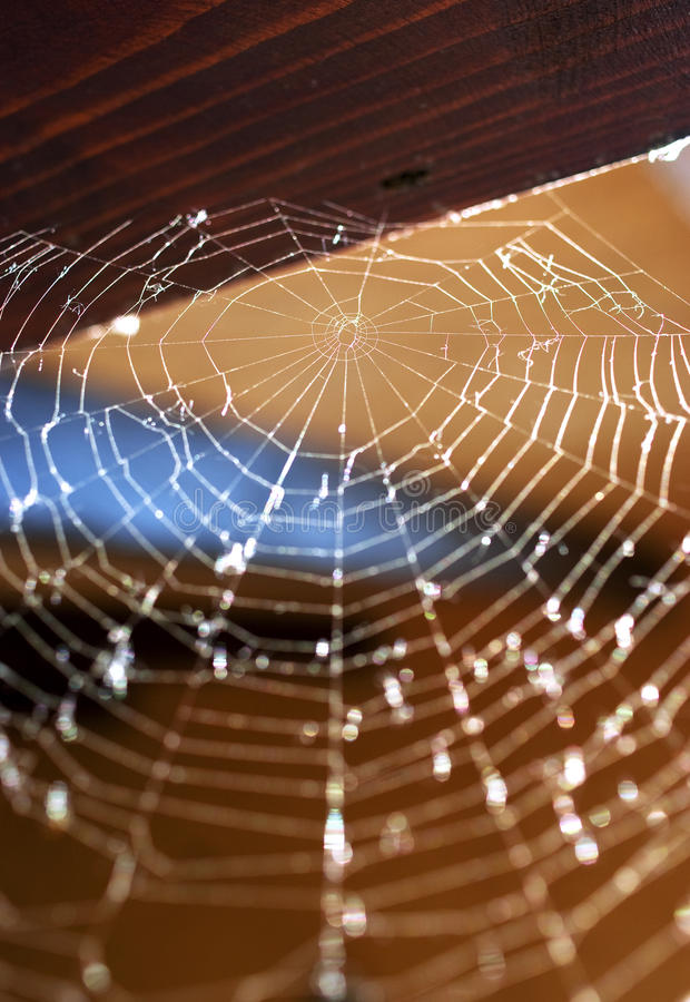 Spider Web Stock Images
