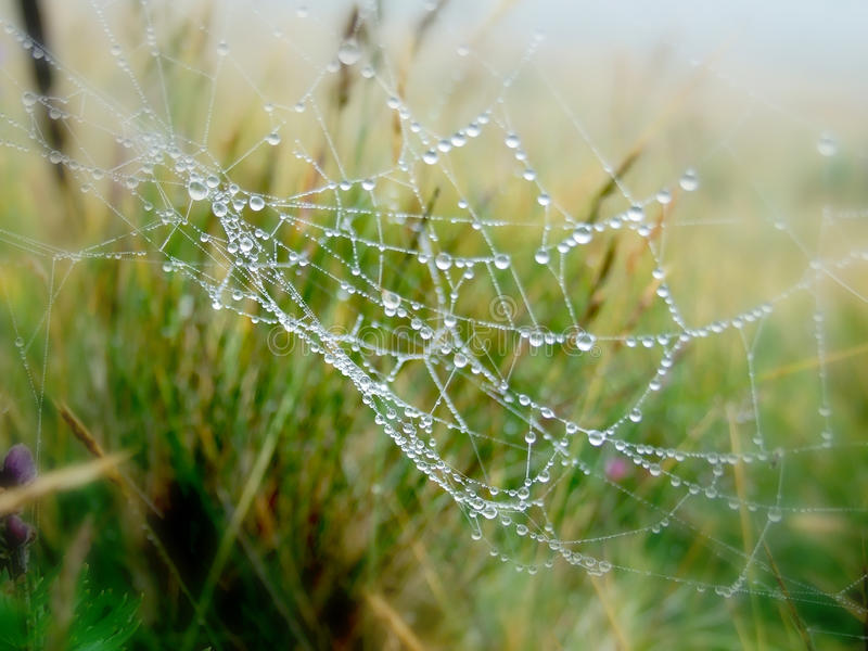 Spider web. Some water drops on spider web stock photo