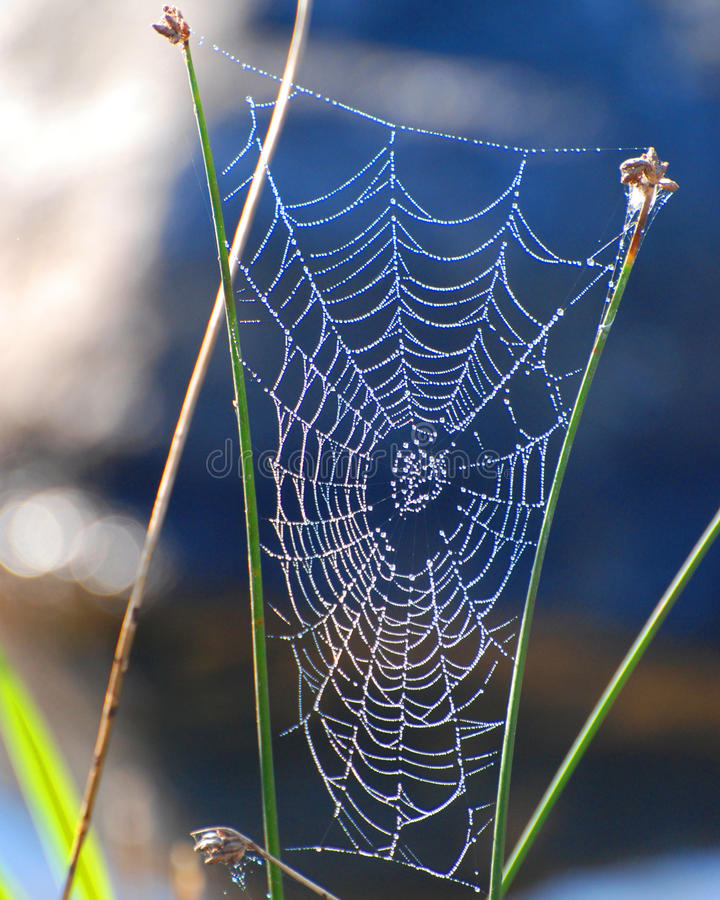 Free Spider Web Royalty Free Stock Photography - 21269777