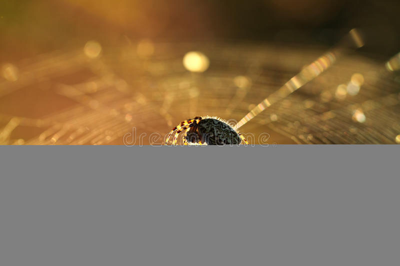 Download Spider on web stock image. Image of wild, spooky, spider - 25716925