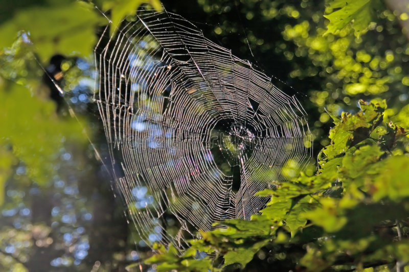 Spider web. Morning, simcoe lake, ontario, canada stock photography