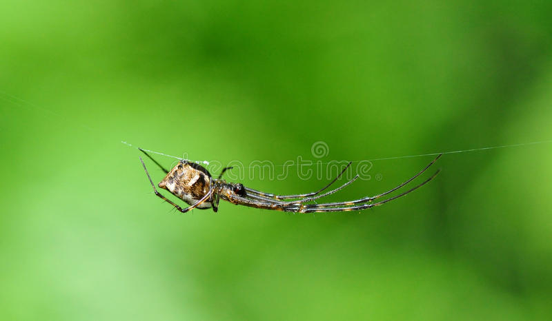 Download Spider on a Web stock photo. Image of brown, nature, macro - 26555006