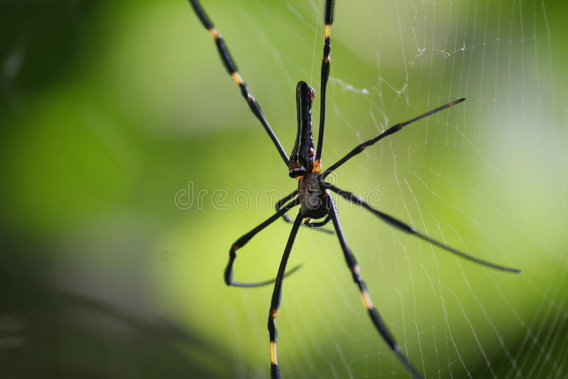 Download Spider and the web stock image. Image of spider, arthropoda - 27172903