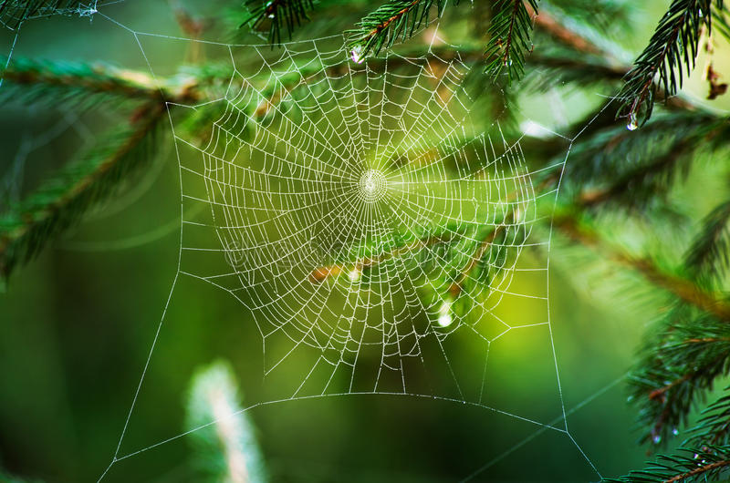 Download Spider web stock photo. Image of glowing, light, beauty - 27256462