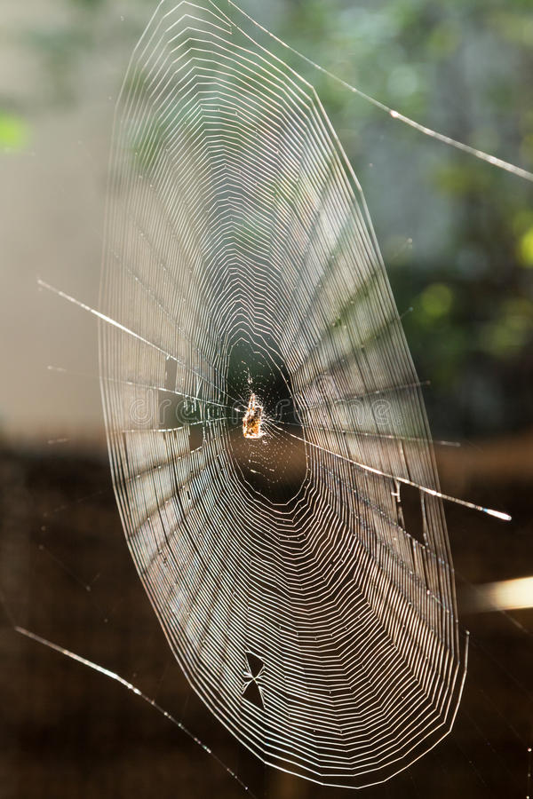 Spider Web. With a spider in it stock images