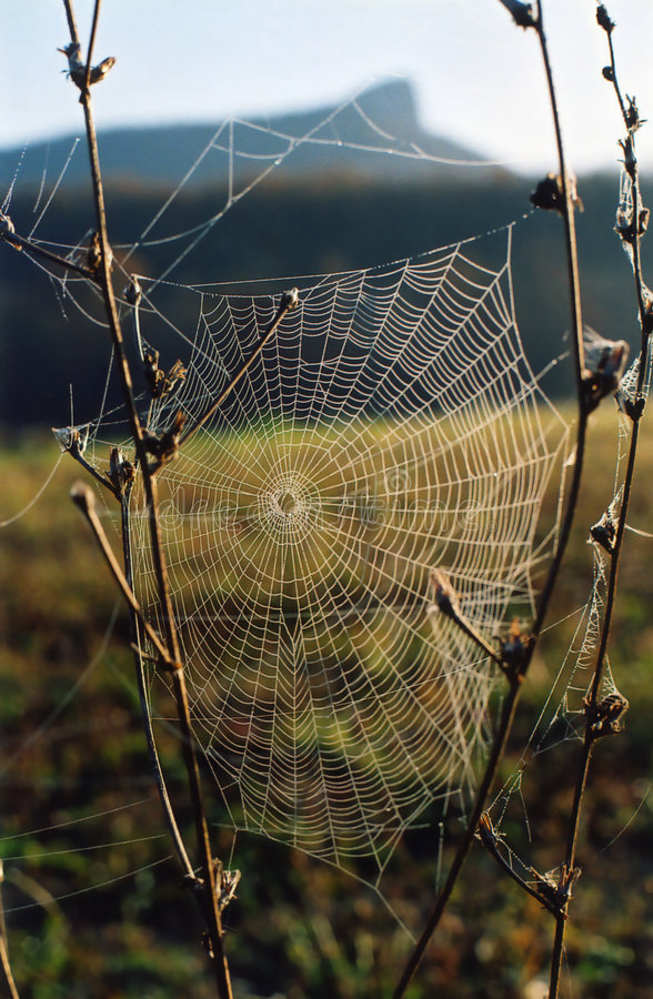 Spider-web royalty free stock photos