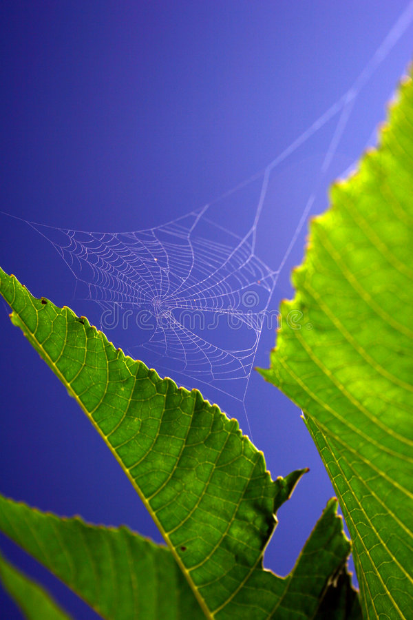 Download Spider Web stock image. Image of bite, weave, insect, arachnid - 749875
