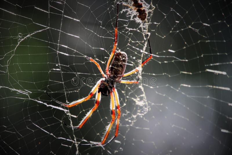 Spider. On web royalty free stock image