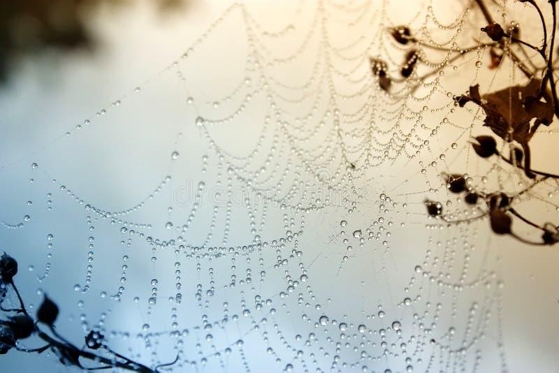 Spider-web royalty free stock photos