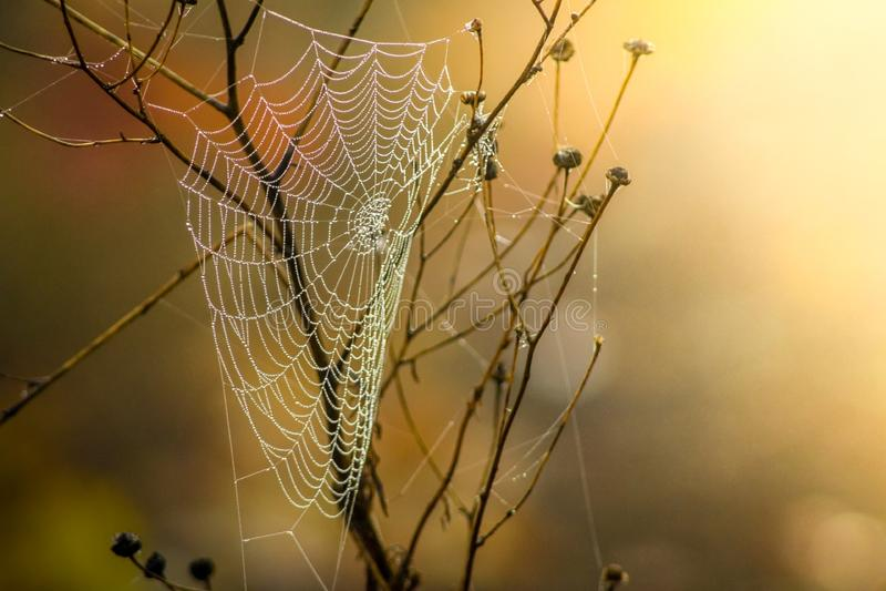 Spider Web, Arachnid, Spider, Invertebrate stock photo
