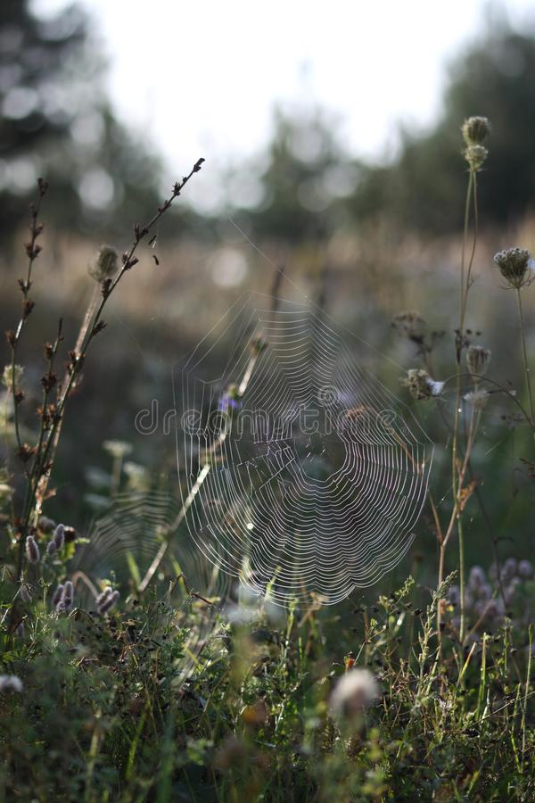 Spider web in autumn stock images