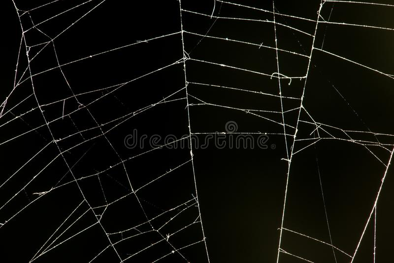 Spider web on a black background. In the park in nature stock image