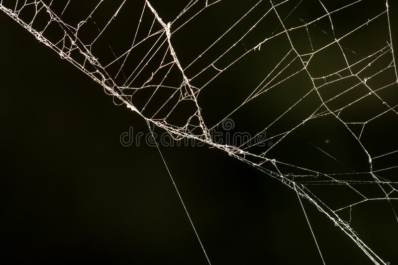 Spider web on a black background. In the park in nature stock images