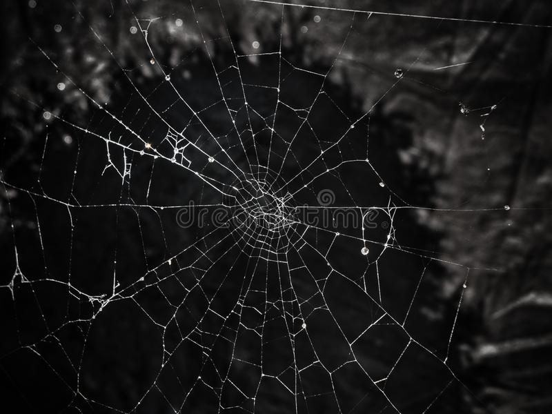 Spider web on black textured background. Spider web with small water drops shot after rain on dark black textured background. Good for halloween scary postcards royalty free stock photos