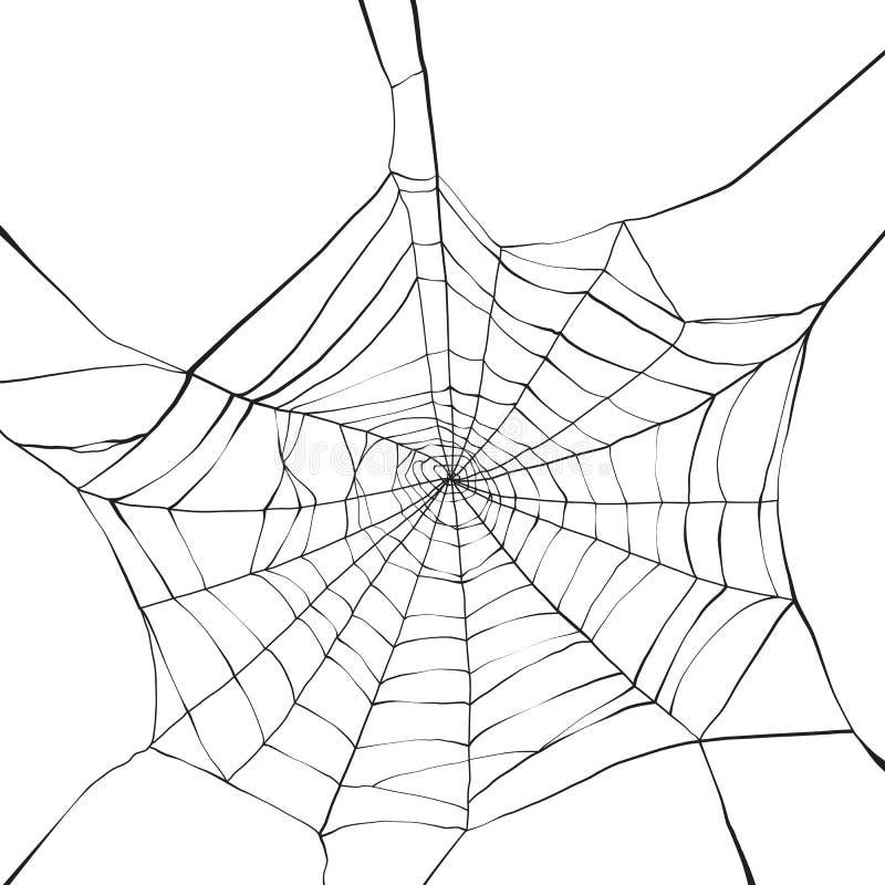 Spider web royalty free illustration