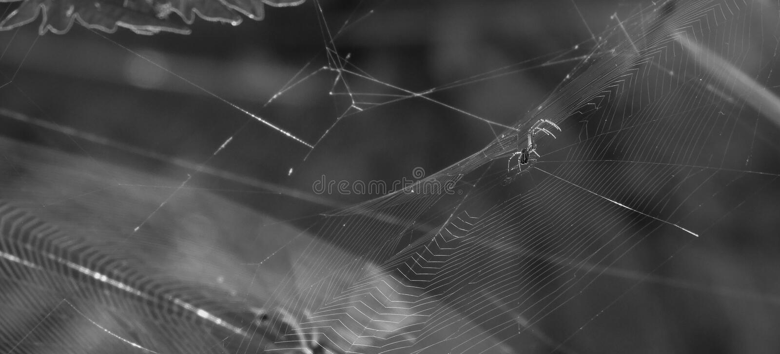 Spider Web, Black, Black And White, Monochrome Photography stock image