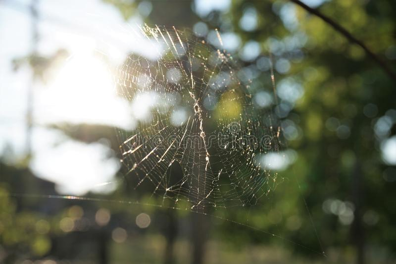 Spider web with blurred background. stock image